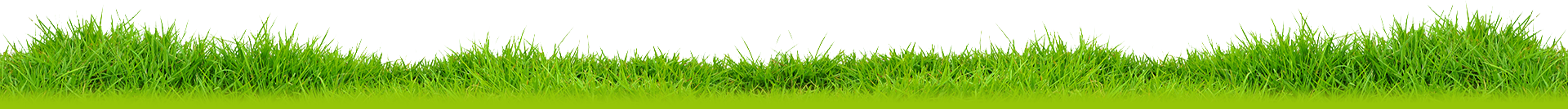 grass-png-image-pictures-images-grass-png-image-13.png